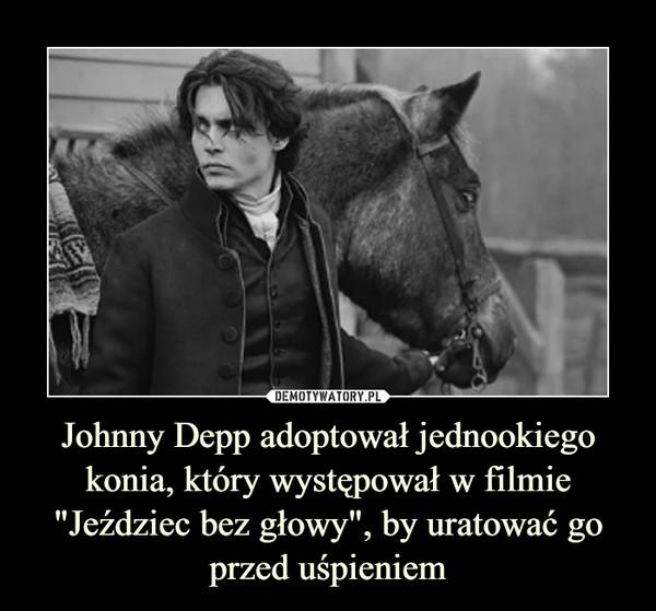 """Johnny Depp adoptował jednookiego konia, który występował w filmie """"Jeździec bez głowy"""", by uratować go przed uśpieniem –"""