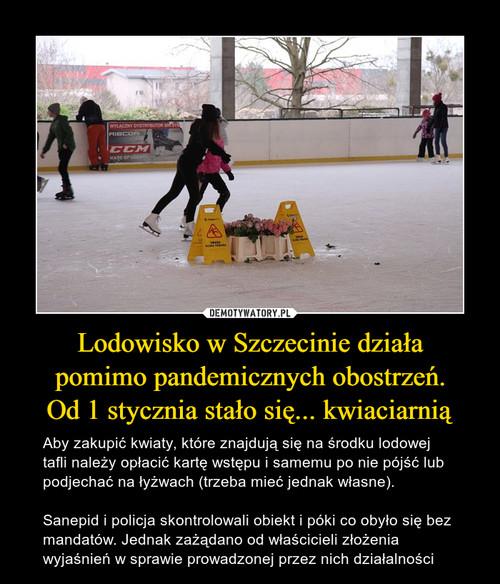 Lodowisko w Szczecinie działa pomimo pandemicznych obostrzeń. Od 1 stycznia stało się... kwiaciarnią