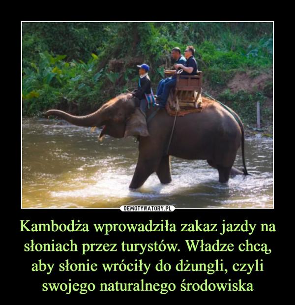 Kambodża wprowadziła zakaz jazdy na słoniach przez turystów. Władze chcą, aby słonie wróciły do dżungli, czyli swojego naturalnego środowiska –