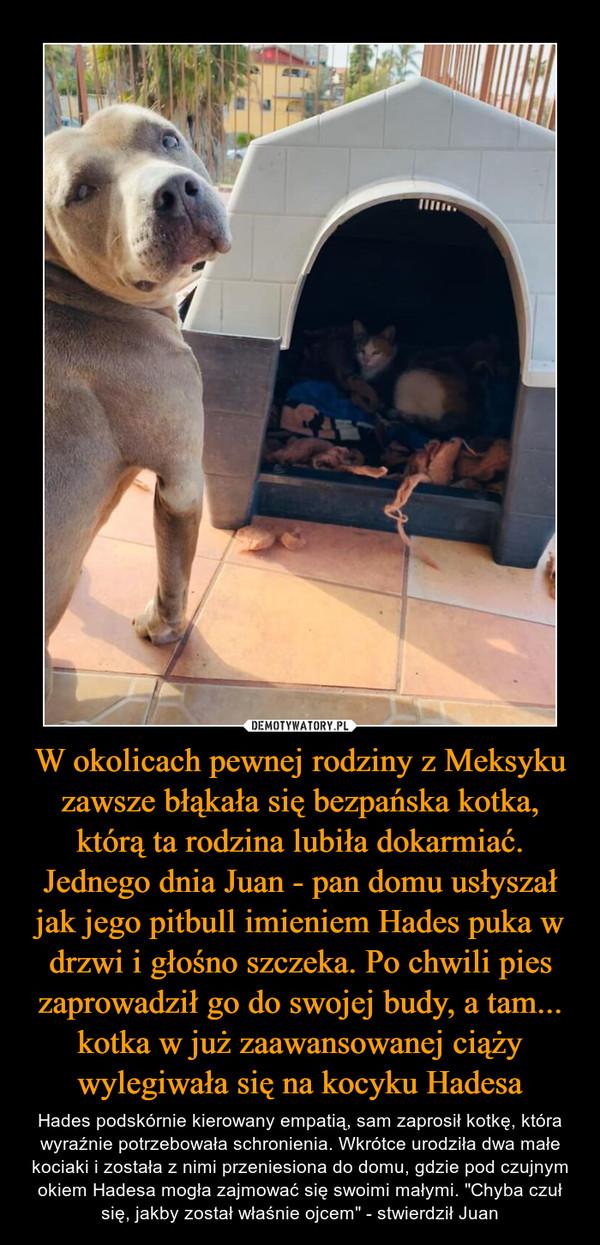 """W okolicach pewnej rodziny z Meksyku zawsze błąkała się bezpańska kotka, którą ta rodzina lubiła dokarmiać. Jednego dnia Juan - pan domu usłyszał jak jego pitbull imieniem Hades puka w drzwi i głośno szczeka. Po chwili pies zaprowadził go do swojej budy, a tam... kotka w już zaawansowanej ciąży wylegiwała się na kocyku Hadesa – Hades podskórnie kierowany empatią, sam zaprosił kotkę, która wyraźnie potrzebowała schronienia. Wkrótce urodziła dwa małe kociaki i została z nimi przeniesiona do domu, gdzie pod czujnym okiem Hadesa mogła zajmować się swoimi małymi. """"Chyba czuł się, jakby został właśnie ojcem"""" - stwierdził Juan"""
