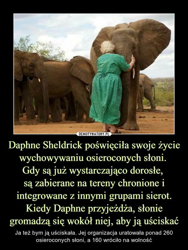 Daphne Sheldrick poświęciła swoje życie wychowywaniu osieroconych słoni. Gdy są już wystarczająco dorosłe, są zabierane na tereny chronione i integrowane z innymi grupami sierot. Kiedy Daphne przyjeżdża, słonie gromadzą się wokół niej, aby ją uściskać – Ja też bym ją uściskała. Jej organizacja uratowała ponad 260 osieroconych słoni, a 160 wróciło na wolność