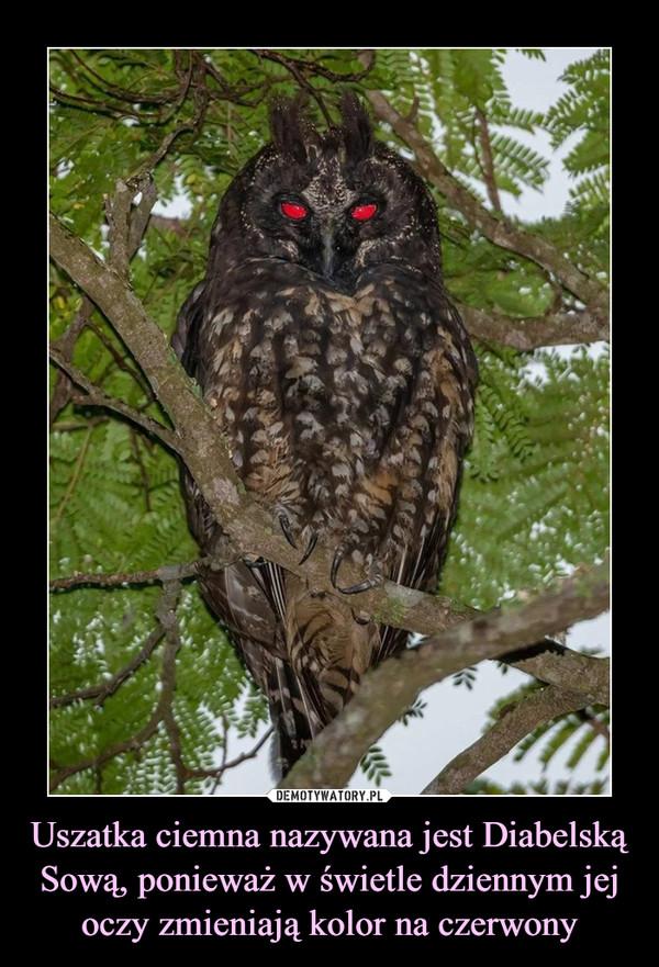 Uszatka ciemna nazywana jest Diabelską Sową, ponieważ w świetle dziennym jej oczy zmieniają kolor na czerwony –