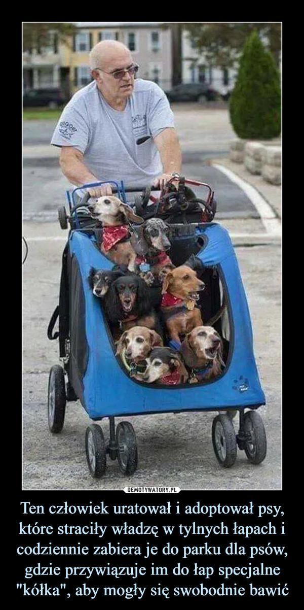 """Ten człowiek uratował i adoptował psy, które straciły władzę w tylnych łapach i codziennie zabiera je do parku dla psów, gdzie przywiązuje im do łap specjalne """"kółka"""", aby mogły się swobodnie bawić –"""