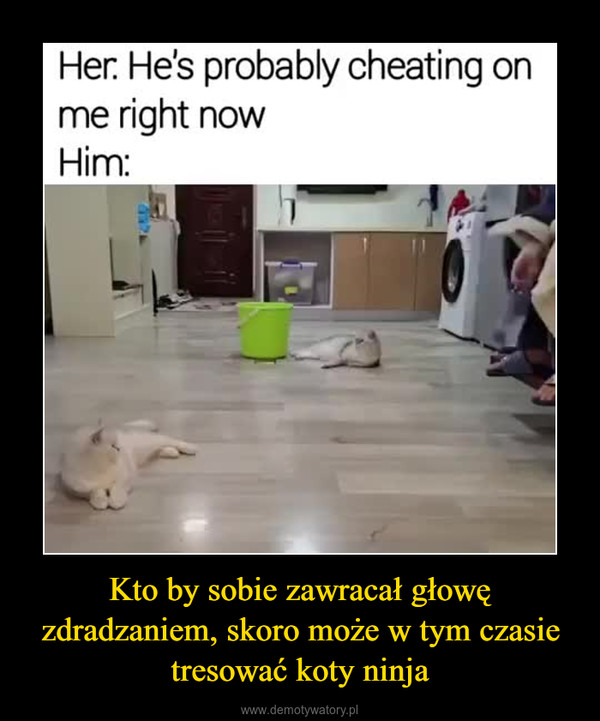 Kto by sobie zawracał głowę zdradzaniem, skoro może w tym czasie tresować koty ninja –