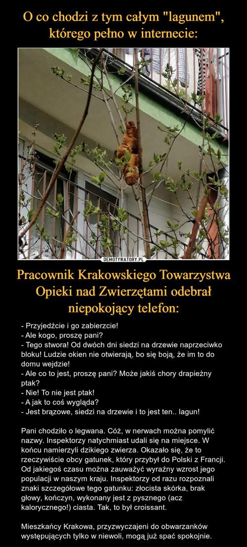"""O co chodzi z tym całym """"lagunem"""", którego pełno w internecie: Pracownik Krakowskiego Towarzystwa Opieki nad Zwierzętami odebrał niepokojący telefon:"""