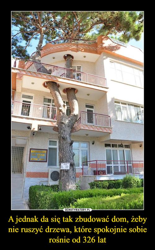 A jednak da się tak zbudować dom, żeby nie ruszyć drzewa, które spokojnie sobie rośnie od 326 lat