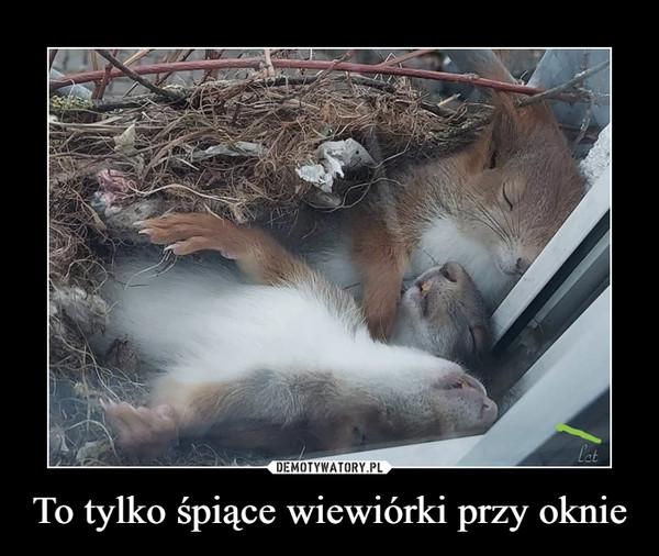 To tylko śpiące wiewiórki przy oknie –