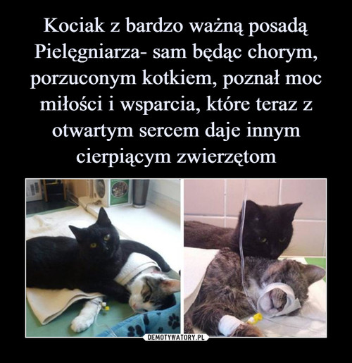 Kociak z bardzo ważną posadą Pielęgniarza- sam będąc chorym, porzuconym kotkiem, poznał moc miłości i wsparcia, które teraz z otwartym sercem daje innym cierpiącym zwierzętom