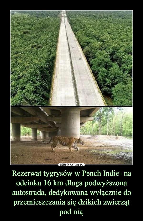 Rezerwat tygrysów w Pench Indie- na odcinku 16 km długa podwyższona autostrada, dedykowana wyłącznie do przemieszczania się dzikich zwierzątpod nią –