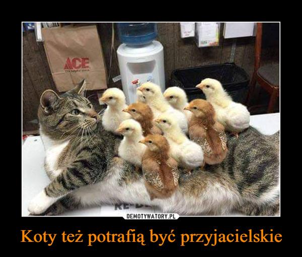 Koty też potrafią być przyjacielskie –