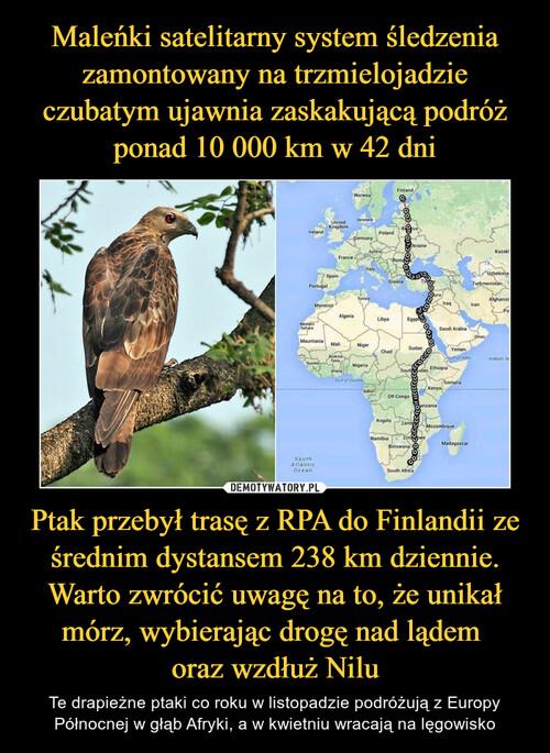 Maleńki satelitarny system śledzenia zamontowany na trzmielojadzie czubatym ujawnia zaskakującą podróż ponad 10 000 km w 42 dni Ptak przebył trasę z RPA do Finlandii ze średnim dystansem 238 km dziennie. Warto zwrócić uwagę na to, że unikał mórz, wybierając drogę nad lądem  oraz wzdłuż Nilu