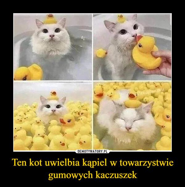 Ten kot uwielbia kąpiel w towarzystwie gumowych kaczuszek –