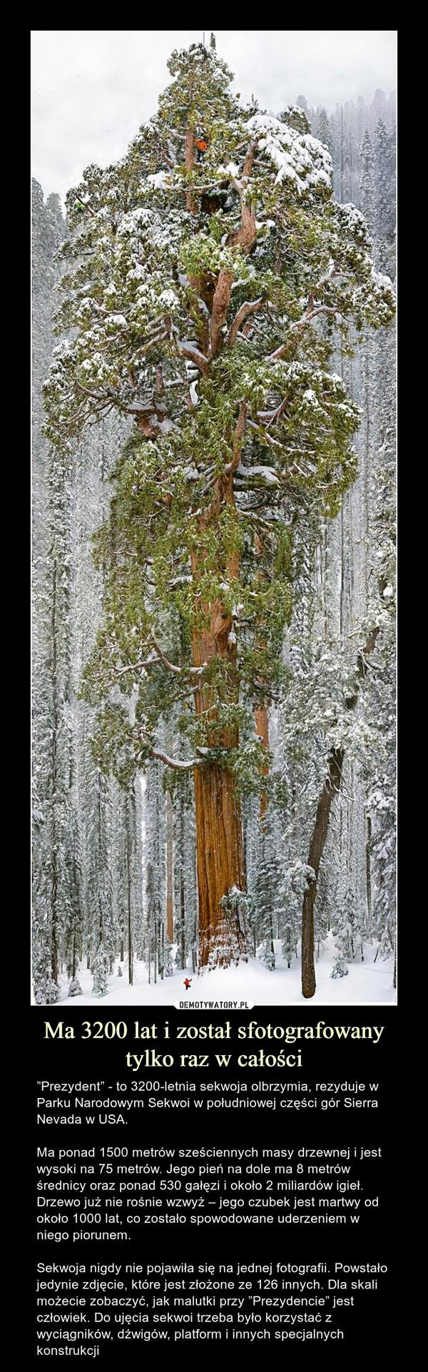 """Ma 3200 lat i został sfotografowany tylko raz w całości – """"Prezydent"""" - to 3200-letnia sekwoja olbrzymia, rezyduje w Parku Narodowym Sekwoi w południowej części gór Sierra Nevada w USA.Ma ponad 1500 metrów sześciennych masy drzewnej i jest wysoki na 75 metrów. Jego pień na dole ma 8 metrów średnicy oraz ponad 530 gałęzi i około 2 miliardów igieł. Drzewo już nie rośnie wzwyż – jego czubek jest martwy od około 1000 lat, co zostało spowodowane uderzeniem w niego piorunem. Sekwoja nigdy nie pojawiła się na jednej fotografii. Powstało jedynie zdjęcie, które jest złożone ze 126 innych. Dla skali możecie zobaczyć, jak malutki przy """"Prezydencie"""" jest człowiek. Do ujęcia sekwoi trzeba było korzystać z wyciągników, dźwigów, platform i innych specjalnych konstrukcji"""