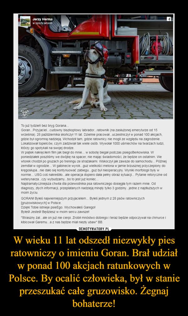 W wieku 11 lat odszedł niezwykły pies ratowniczy o imieniu Goran. Brał udział w ponad 100 akcjach ratunkowych w Polsce. By ocalić człowieka, był w stanie przeszukać całe gruzowisko. Żegnaj bohaterze!